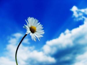 893_kwiat_i1